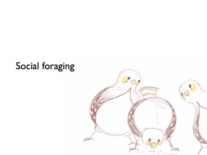 Birds foraging socially...