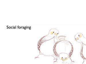 Birds foraging socially...